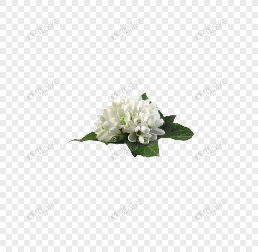 ดอกมะลิ: ดอกมะลิสีขาว ดาวน์โหลดรูปภาพ (รหัส) 400828354_ขนาด 146.6