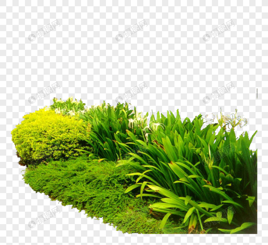 Bushes png image_picture free download 400830607_lovepik com