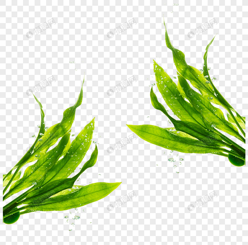green and plain seaweed png