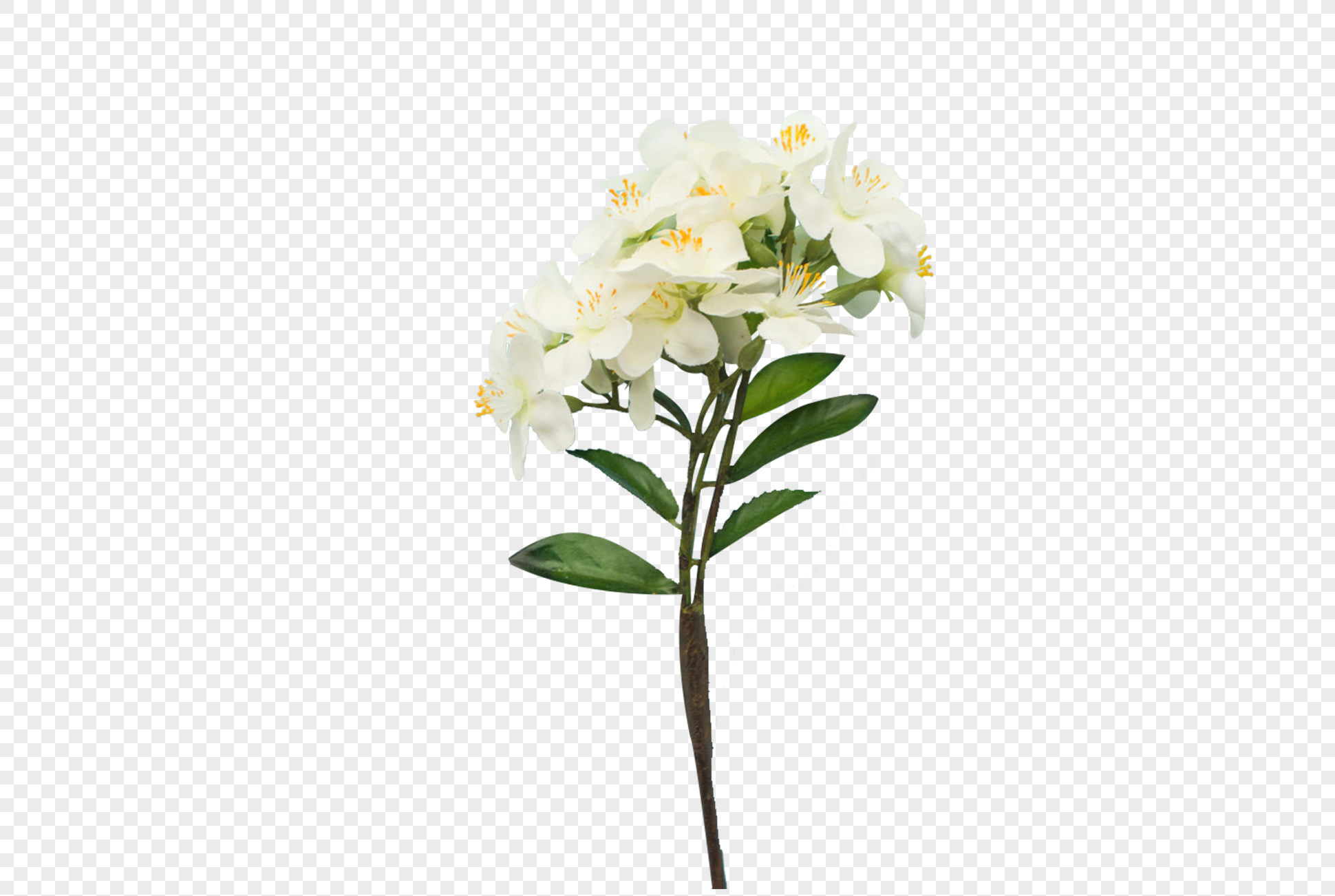 A Bunch Of White Flowers Png Imagepicture Free Download