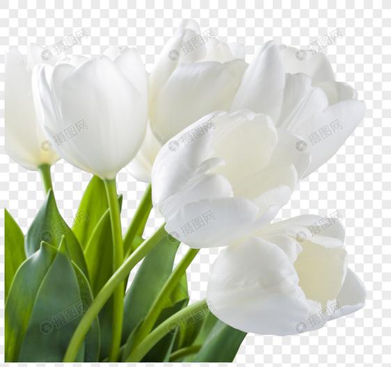 Bunga Bakung Putih Tanaman Bunga Kartun Gambar Unduh Gratis