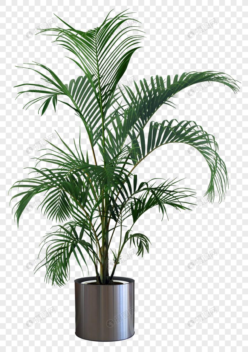 Plante Haute En Pot photo de pot de plante hd_numéro de l'image400907510_format