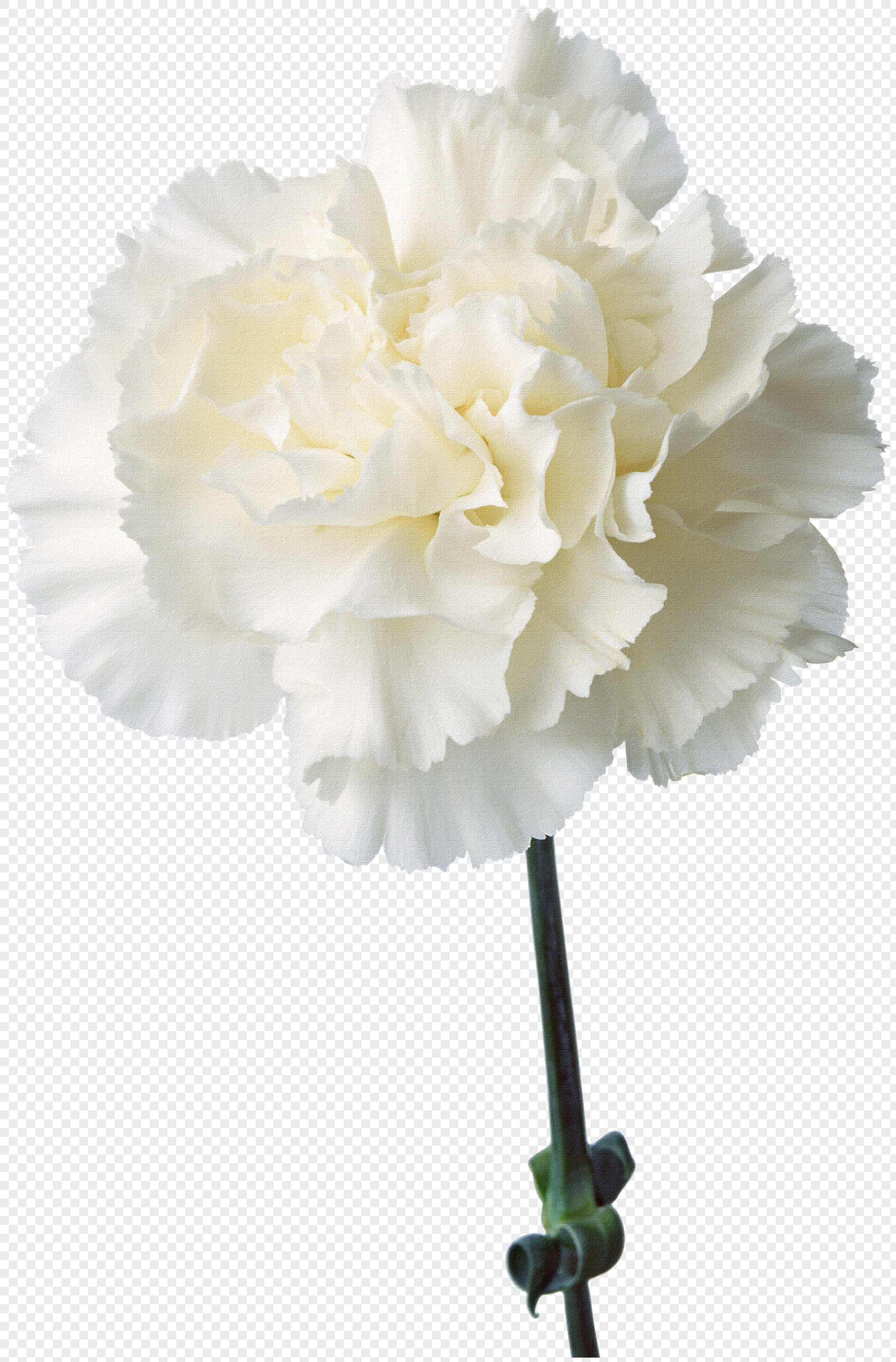 Flower Pattern Flower Element White Carnation Png Imagepicture Free