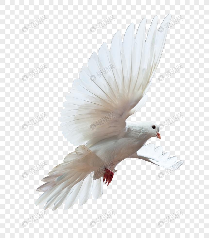 Png Mewarnai Gambar Burung Dara Wwwtollebildcom