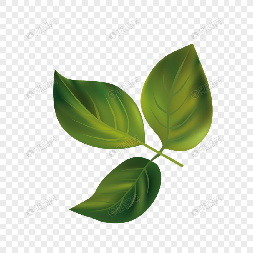 large-young-leaf-pic-hand