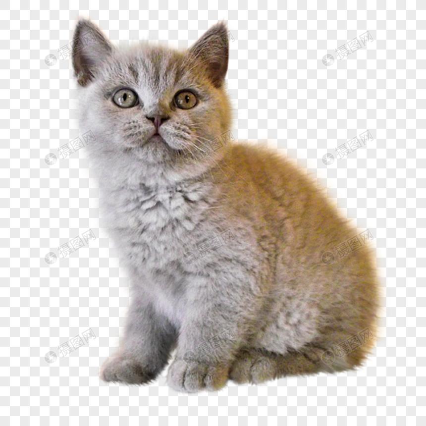 Download 65+ Gambar Kucing Png Paling Baru Gratis