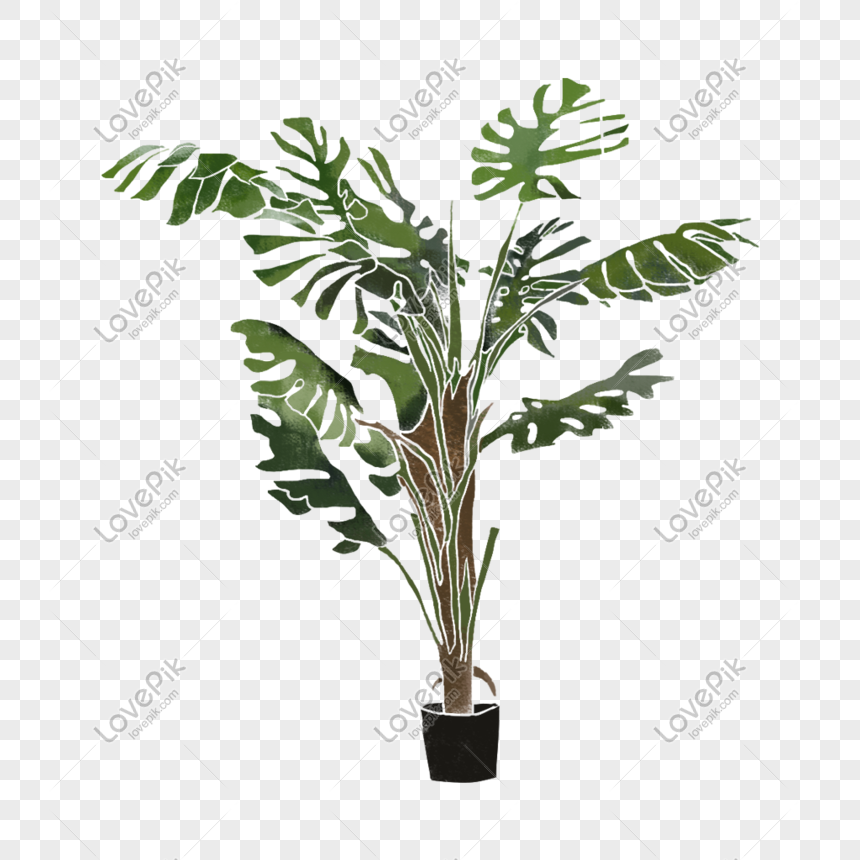 hand painted plants materials png
