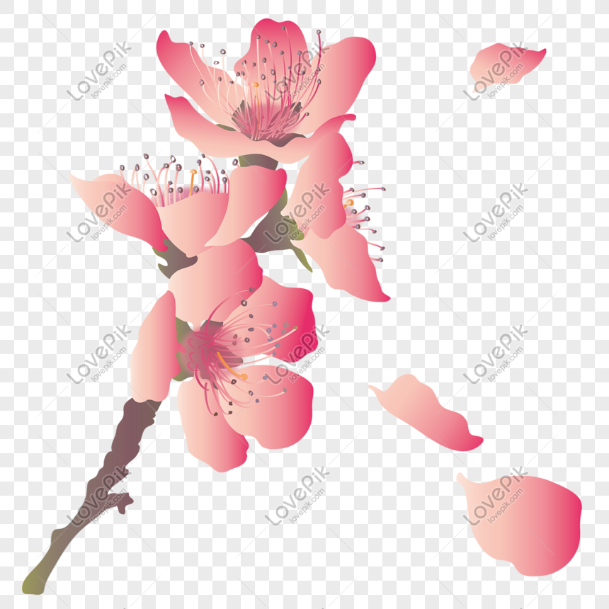 a bunch of cherry blossoms romance flying pink cherry petals png