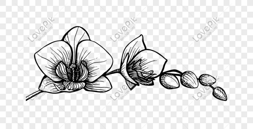 Lakaran Lukisan Bunga Orkid Cikimm Com