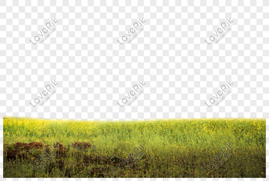 Rape field png image_picture free download 401015194_lovepik.com