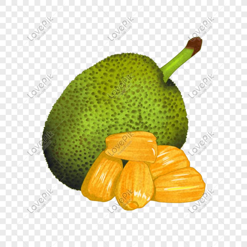 paling populer 30 gambar kartun buah nangka