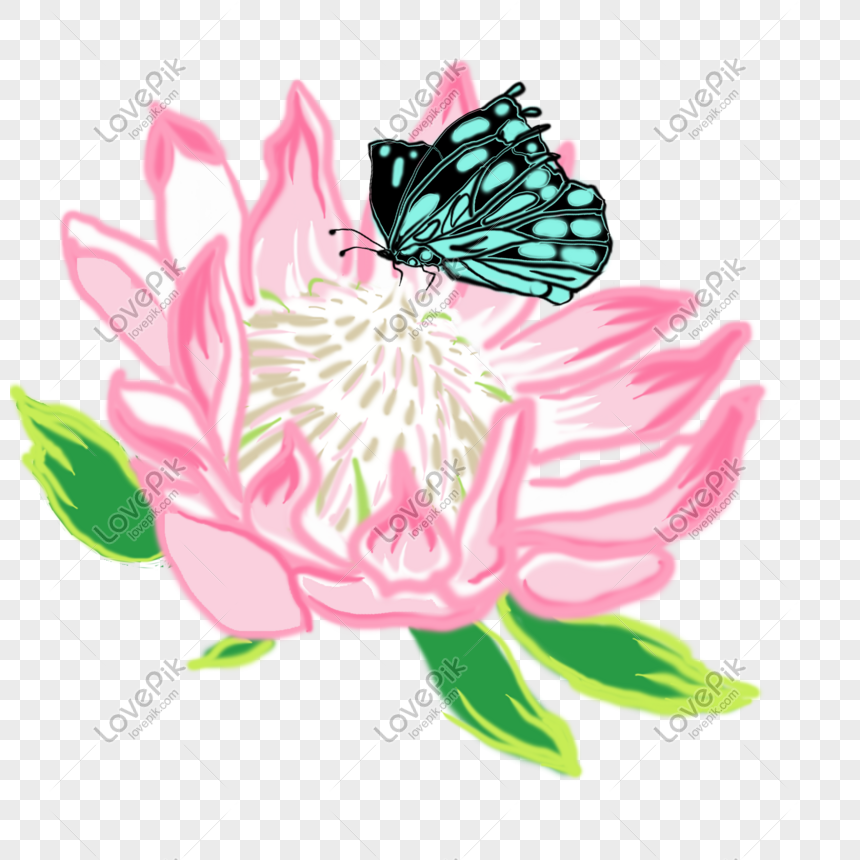 Bunga Kupu Kupu Gambar Unduh Gratis Grafik 401054615format Gambar