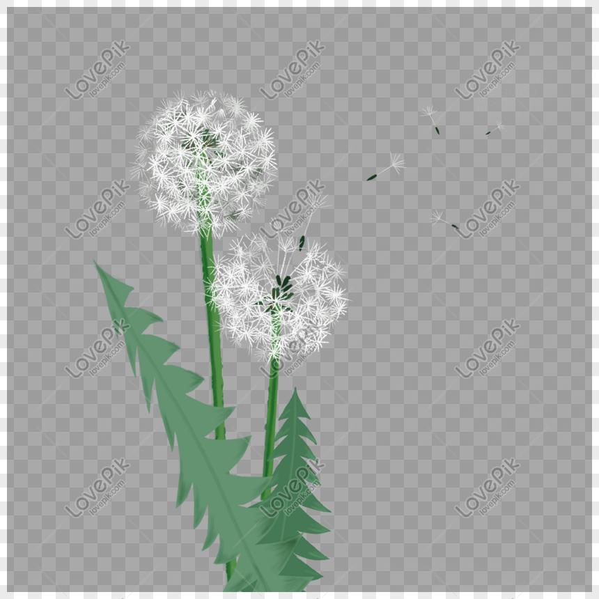 aesthetic dandelion png