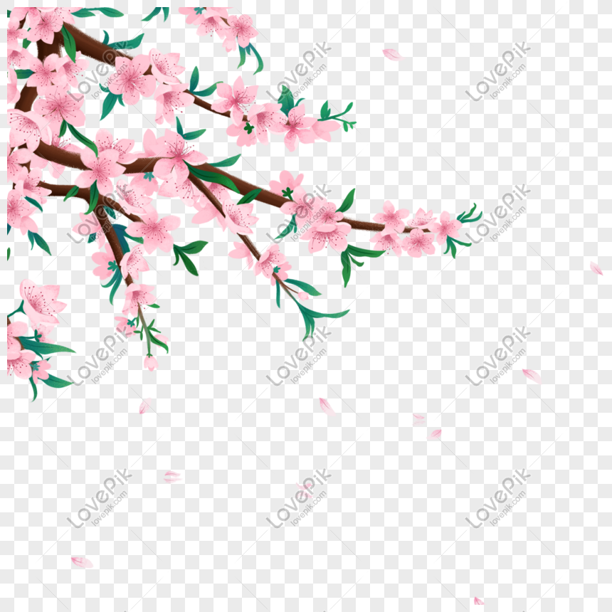peach blossom png