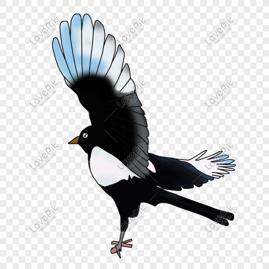 Flying birds png image_picture free download