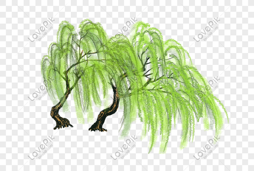 willow png