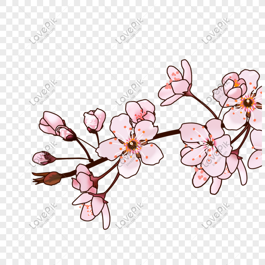peach blossom branch png