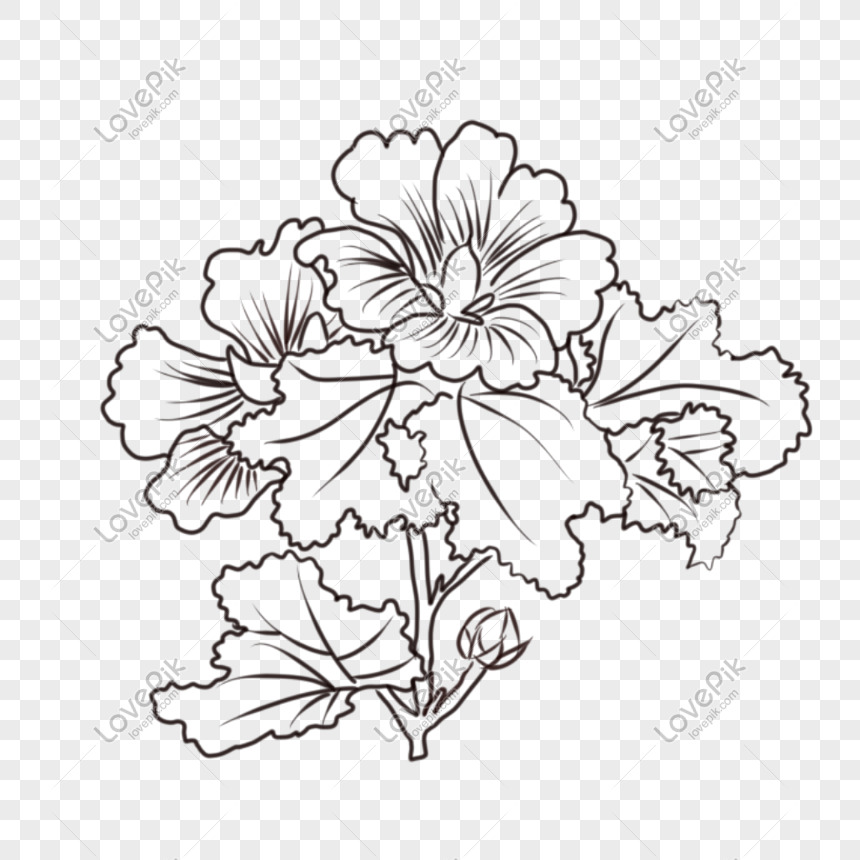 Flower Line Drawing Png Image Picture Free Download 401100403 Lovepik Com