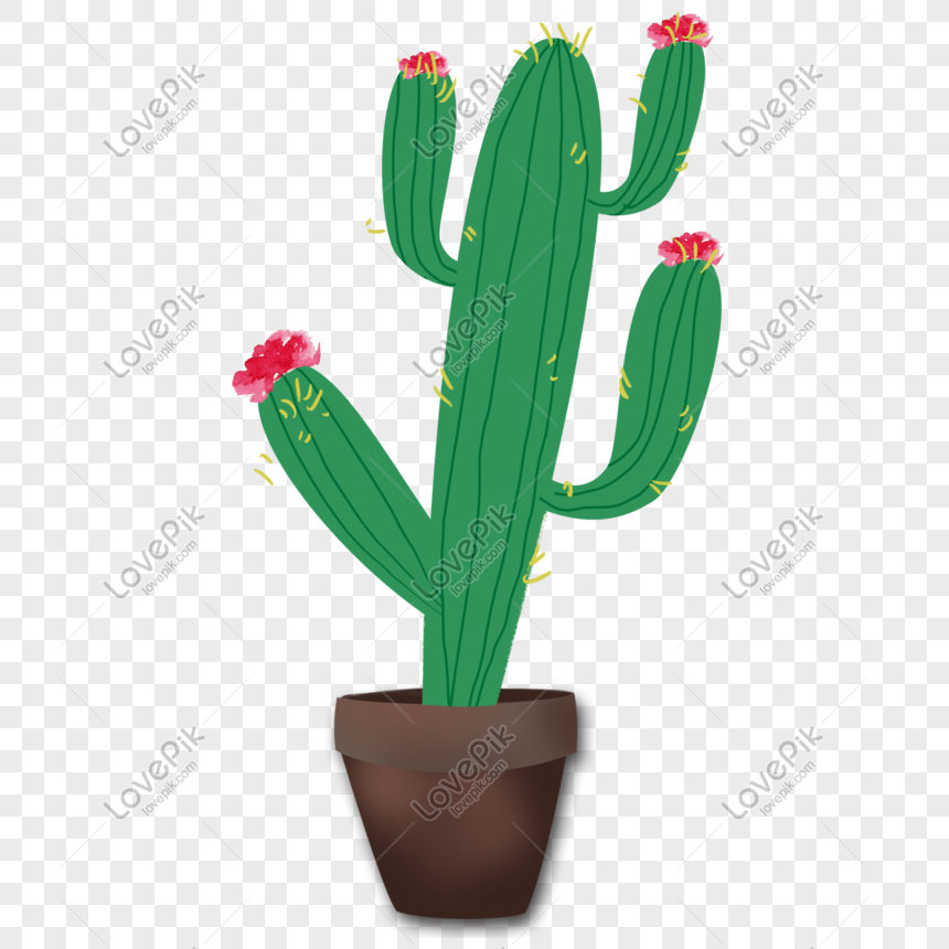 potted plant cactus illustration png