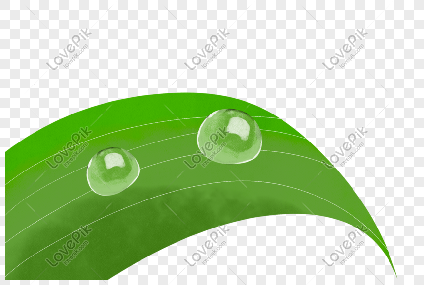 Water Droplets On Leaves Png Image Picture Free Download 401117784 Lovepik Com