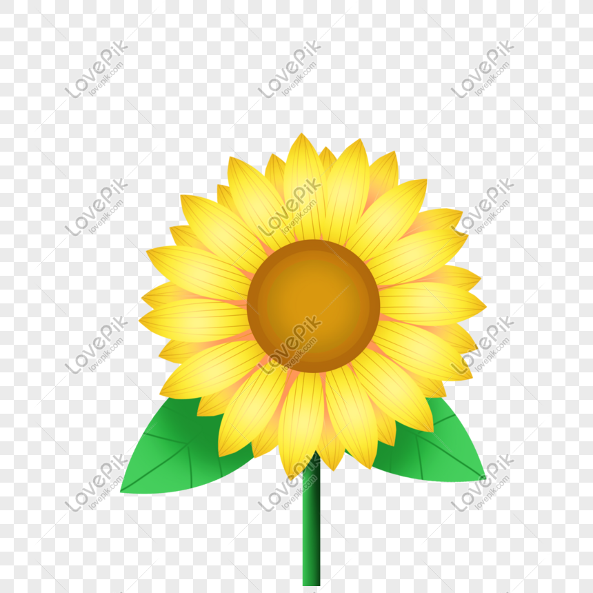 Aesthetic Sunflower Png Image Picture Free Download