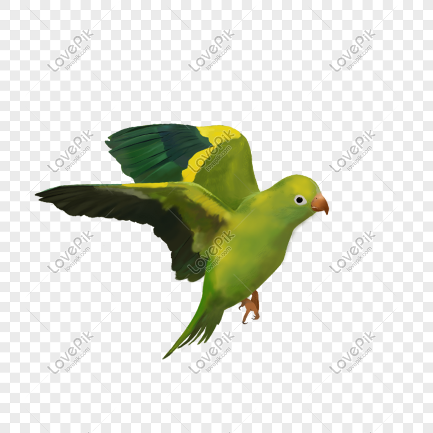 Flying bird png image_picture free download 401123274_lovepik com