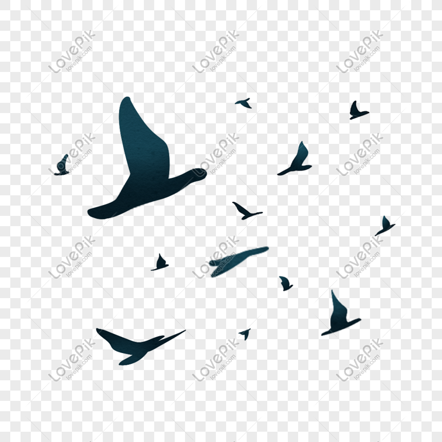 Hand drawn flying bird png image_picture free download