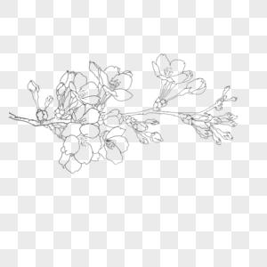 190000 Flower Line Drawing Hd Photos Free Download Lovepik Com