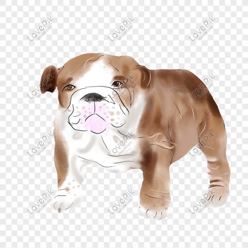 Anjing Lucu Bulldog Inggris Png Grafik Gambar Unduh Gratis Lovepik