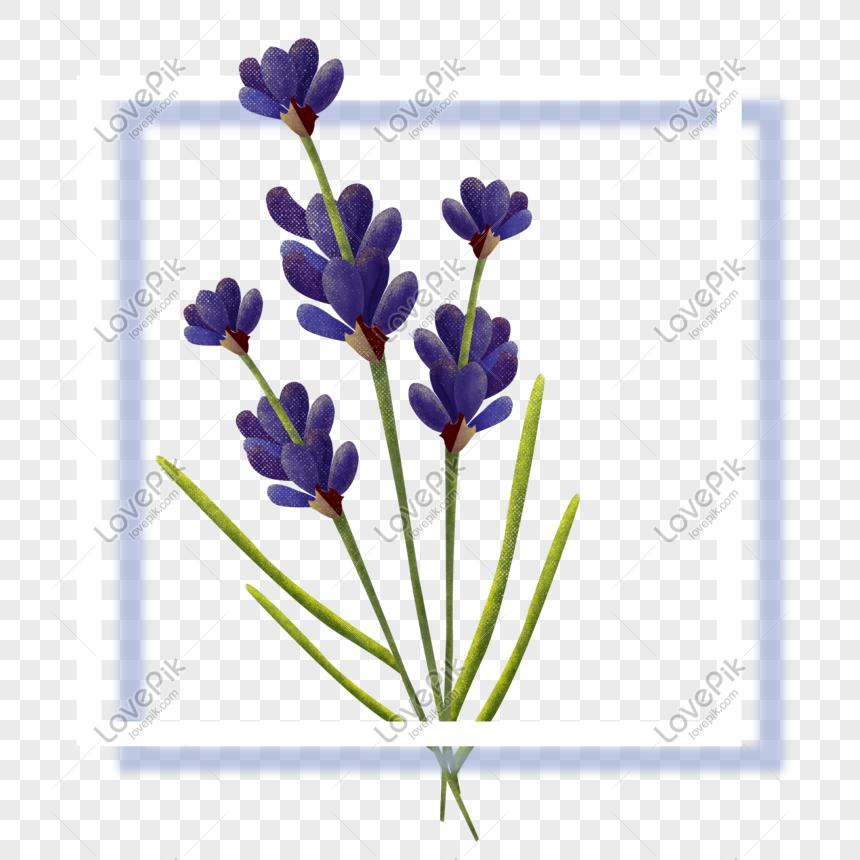 Unduh 7200 Koleksi Gambar Bunga Lavender Kartun Terbaik