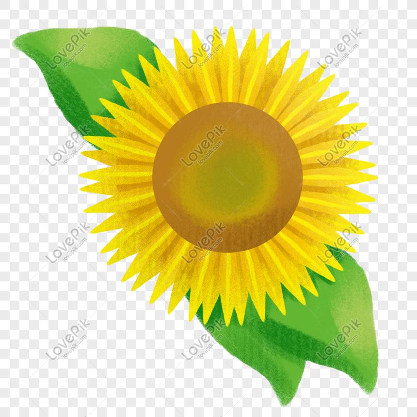Bunga Matahari Kartun Arini Gambar