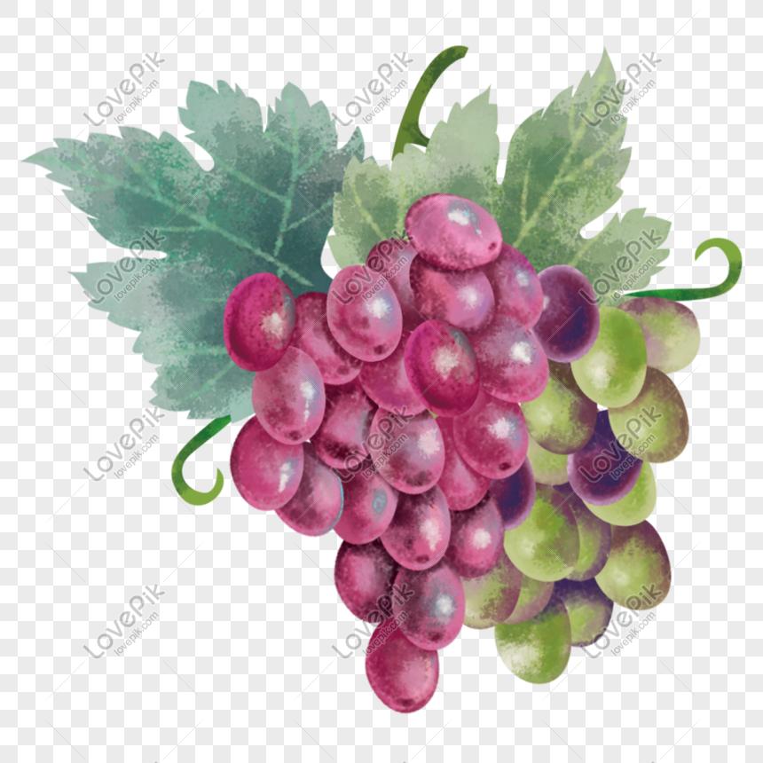 100+ Gambar Anggur Yang Mudah Digambar Paling Hist