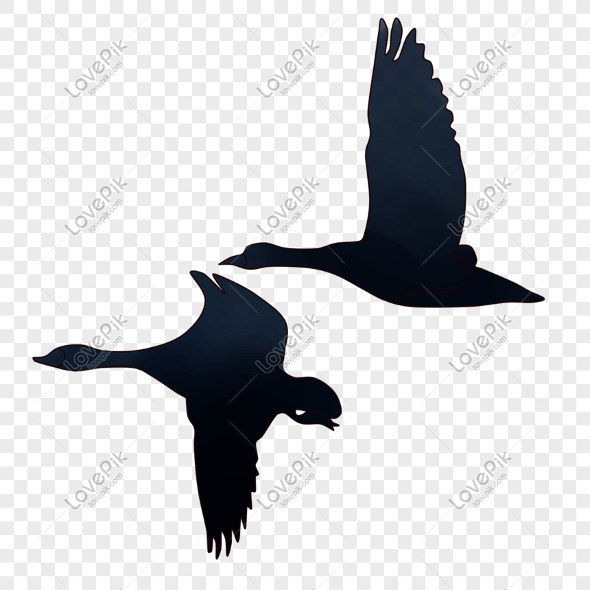 Flying birds png image_picture free download 401233580_lovepik com