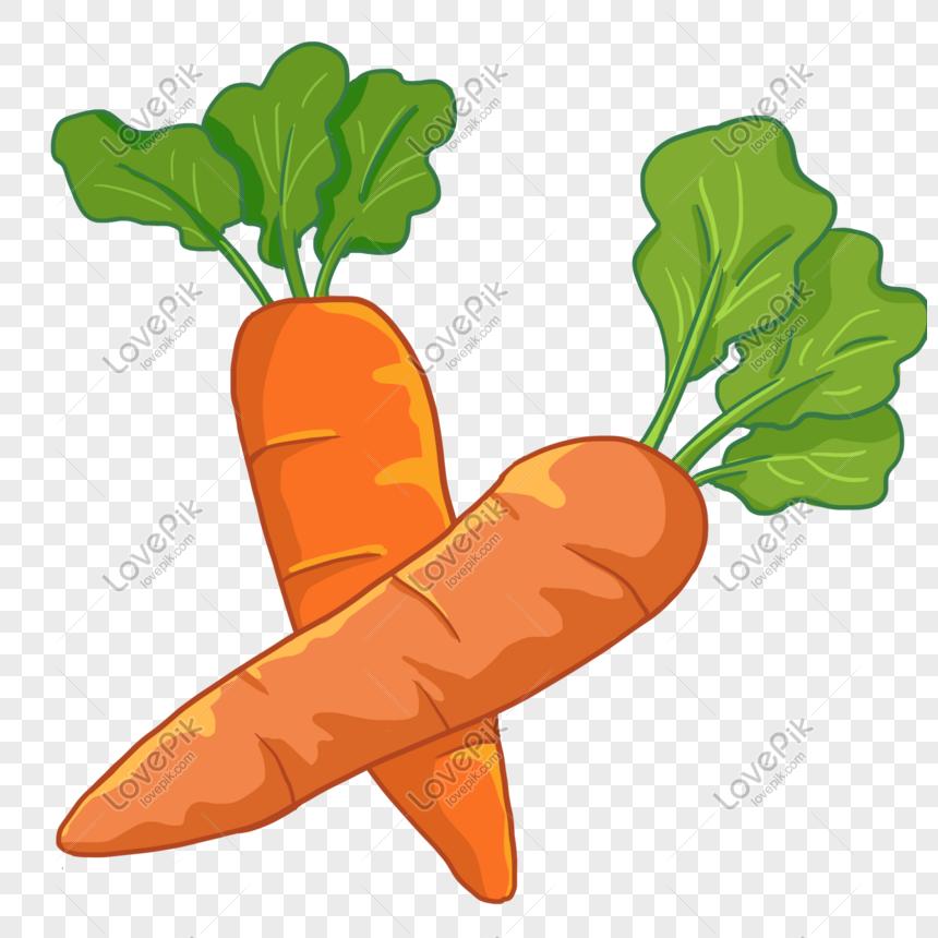 Dibujados A Mano Dibujos Animados Cosecha Cultivos Zanahorias Imagenes De Graficos Png Gratis Lovepik Dibujos de zanahorias para imprimir. dibujados a mano dibujos animados