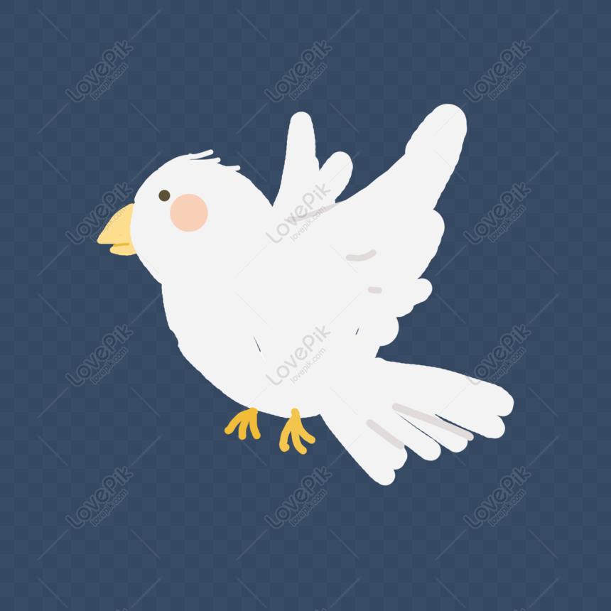 Merpati Burung Merpati Putih Comel Gambar Unduh Gratis Imej