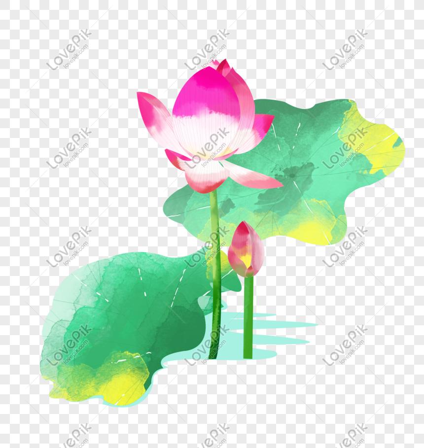 summer solstice pink lotus blooming multiple slices lotus leaf i png