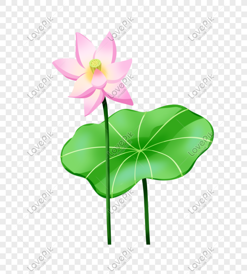 summer solstice lotus leaf pink lotus illustration element hand png