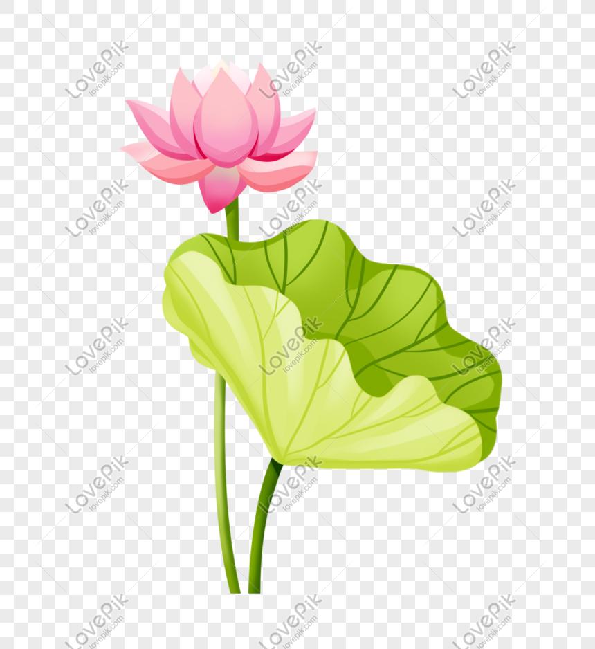 summer solstice lotus blooming large lotus leaf illustration ele png