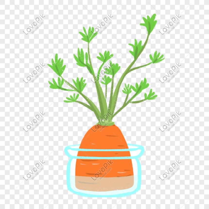 Planta Hidroponica De Zanahoria Fresca De Verano Imagenes De Graficos Png Gratis Lovepik A técnica da solução nutritiva recirculante (nft). zanahoria fresca de verano