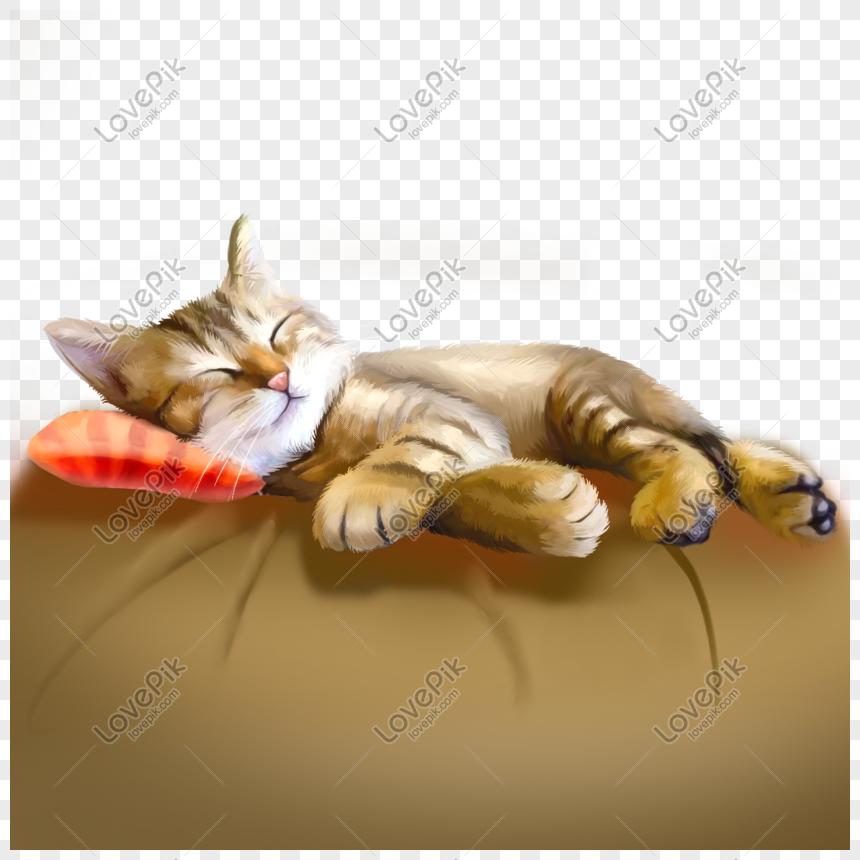 Kucing Kucing Kuning Kucing Mesir Sedang Tidur Lucu Hewan