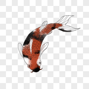 c31448f0ff1 오징어 붉은 물고기 잉어 이미지 _사진 401296887 무료 다운로드_lovepik.com
