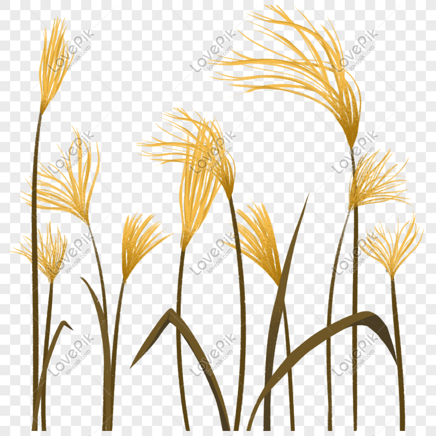 Reed Png Image Picture Free Download 401513465 Lovepik Com