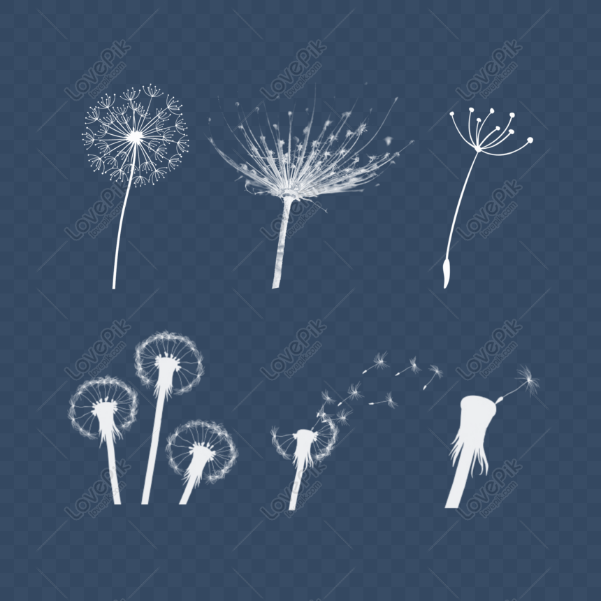 dandelion collection free element png