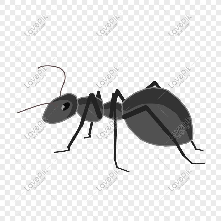 Lovepik- صورة PSD-401531078 id الرسومات بحث - صور النمل رسمت باليد