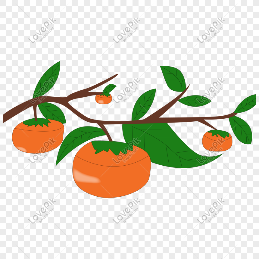 Cartoon Hand Drawn Persimmon On Autumn Fruit Branch Png Image Picture Free Download 401540827 Lovepik Com