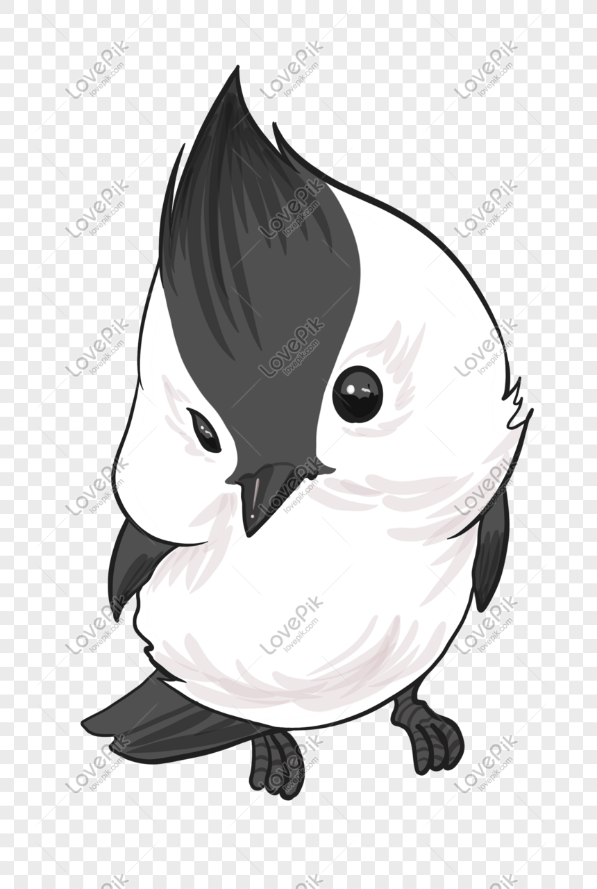 Black And White Chubby Bird Png Image Picture Free Download 401541577 Lovepik Com