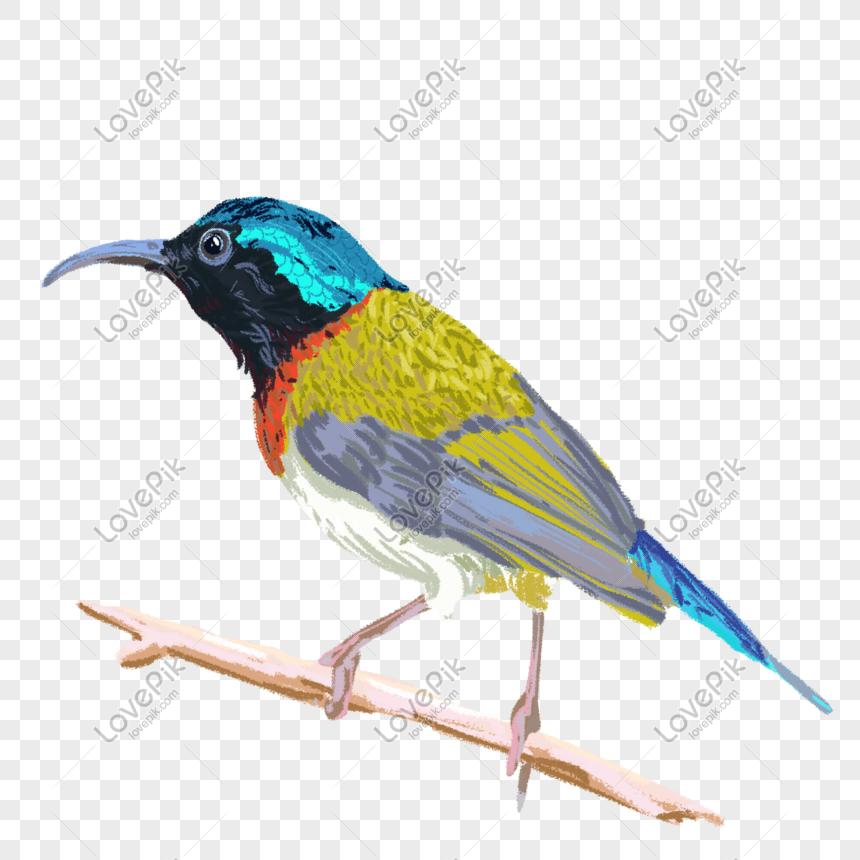 Burung Kolibri Png Grafik Gambar Unduh Gratis Lovepik