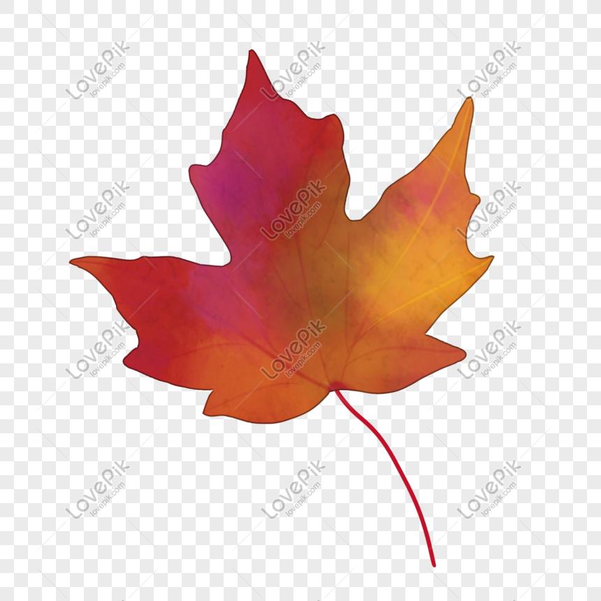 Kartun Daun Maple Merah Png Grafik Gambar Unduh Gratis Lovepik