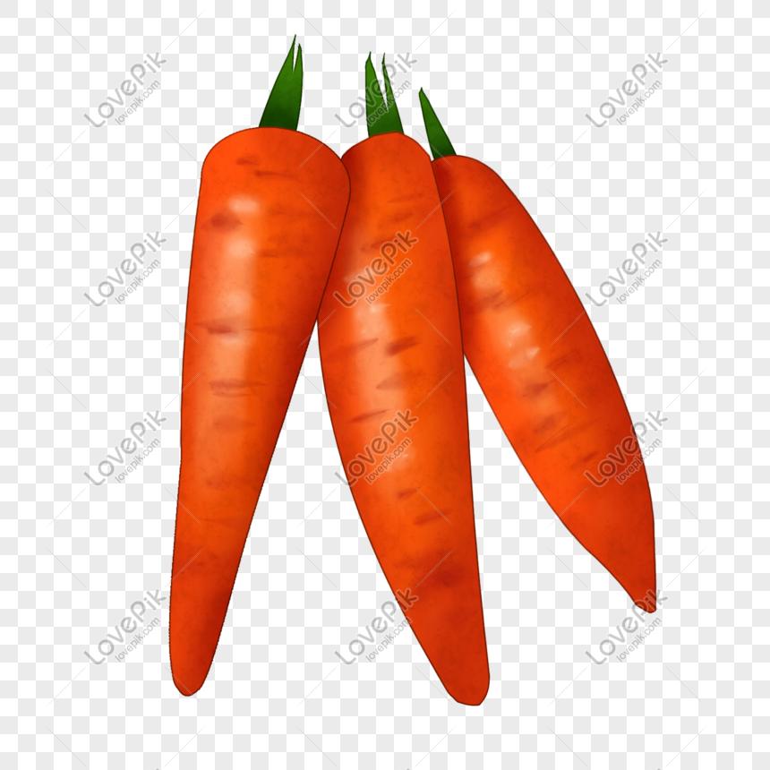 Dibujos Animados De Tres Zanahorias Imagenes De Graficos Png Gratis Lovepik Descarga este vector premium de conejo de dibujos animados con zanahorias y descubre más de 10 millones de recursos gráficos en freepik. dibujos animados de tres zanahorias