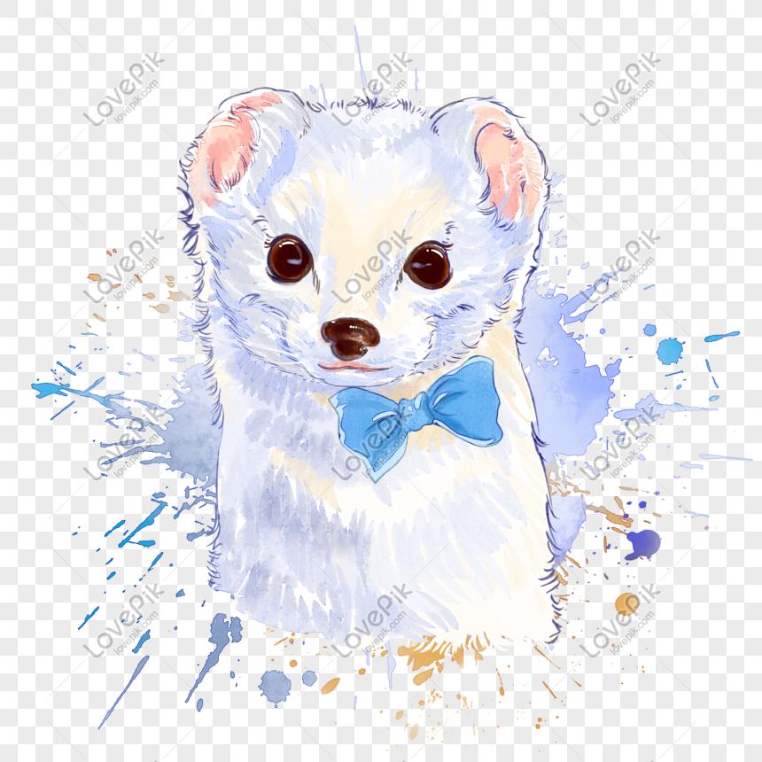 Cat Air Musang Putih Digambar Tangan Png Grafik Gambar Unduh Gratis Lovepik